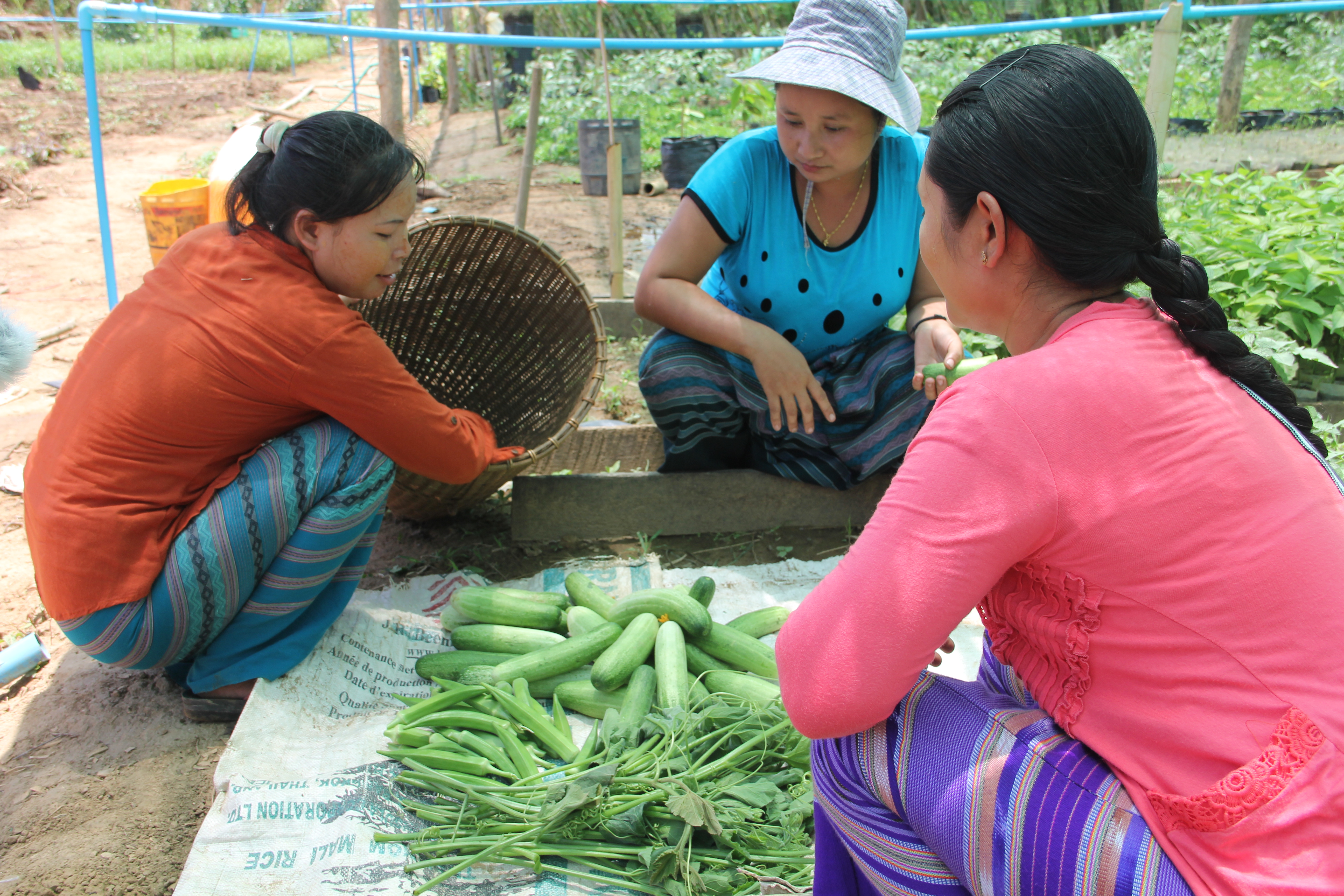 Women cultivating fruit and vegetables as part of the LIFE project in Myanmar.
